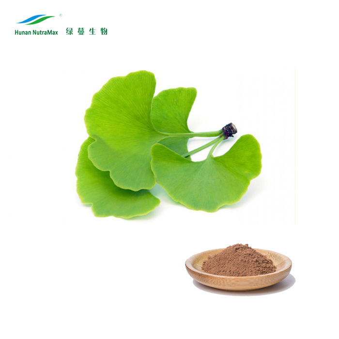 100% herbal Ginko flavones Terpenlactone Ginkgo biloba leaves Extract 24/6