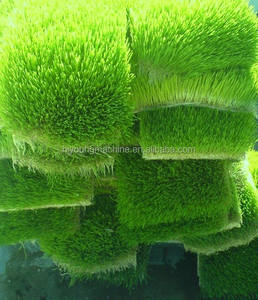 Multi-function Hydroponic fodder processing system /Barley grass growing machine / fodder production machine