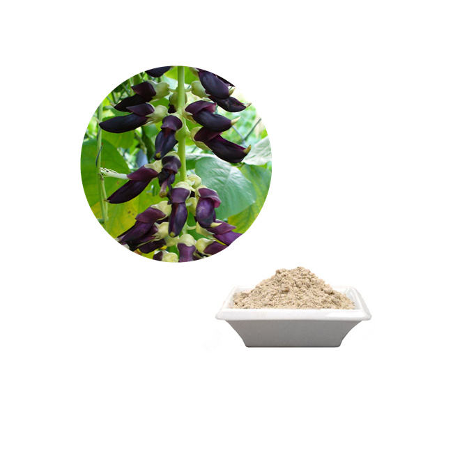 Ultima Superfoods 15%-99% l-dopa <span class=keywords><strong>Velluto</strong></span> Magia Bean per Antidepressivo