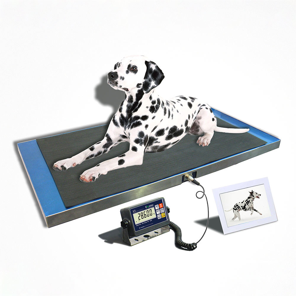 AP animal pet veterinary scales for cat dog weight control