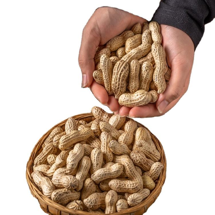 HACCP Certificate peanuts bulk roasted salted peanuts snacks food for import