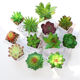 Mini Artificial Succulent Plants For Indoor & Outdoor Decorative Bonsai Plants Mini Succulent Plant Pot