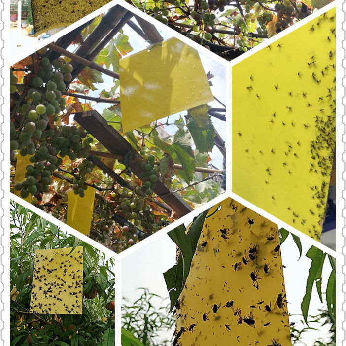 Paper Double Yellow Insect Glue Trap, Sticky Paper Trap To Control Flying Plant Insect In Garden