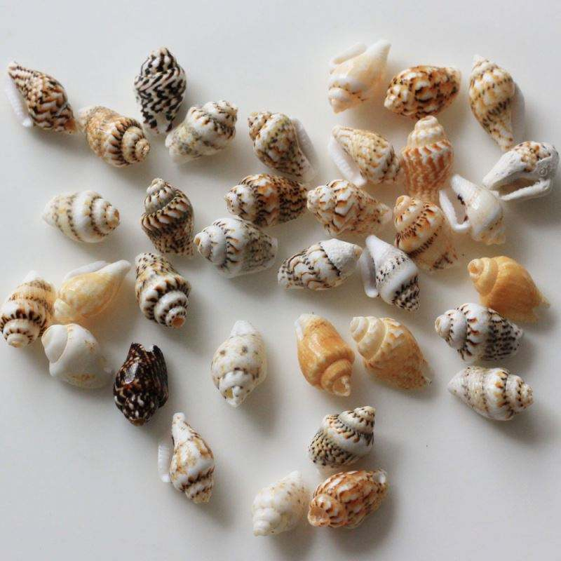 Wholesale Novel Beautiful Shells 1200pcs/bag Multi Styles Sell Well Craft Decoration Making Materials Accessories