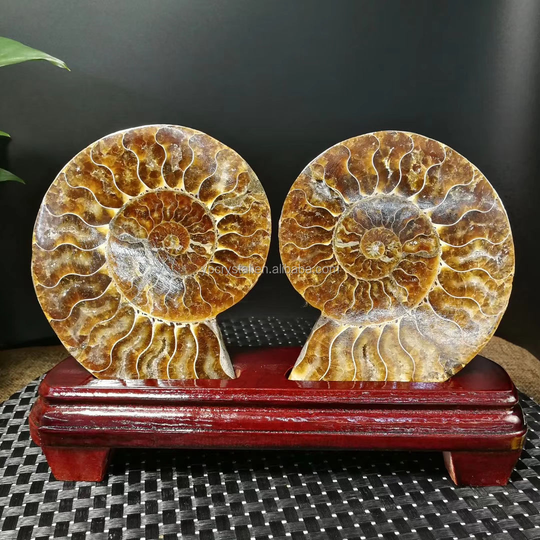 For Home Decoration Natural Conch Ammonite Crystal Polished Fossil Crystal Gift
