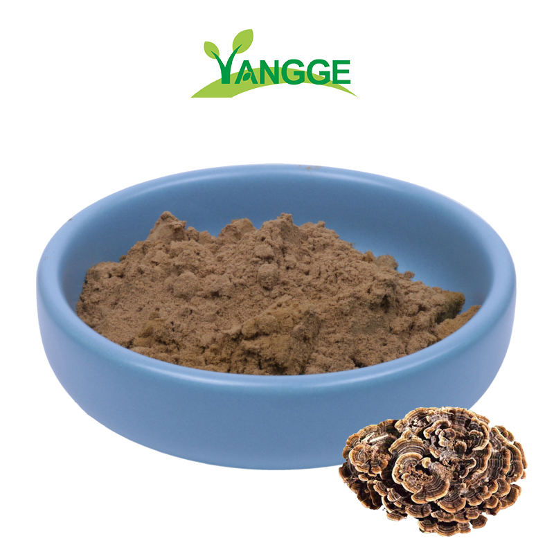Natural cloud mushroom extract powder/yunzhi extract10%-50% Coriolus versicolor Polysaccharide