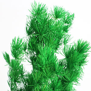 Flower decoration real everlasting flowers Preserved Asparagus myrioeladus natural flowers