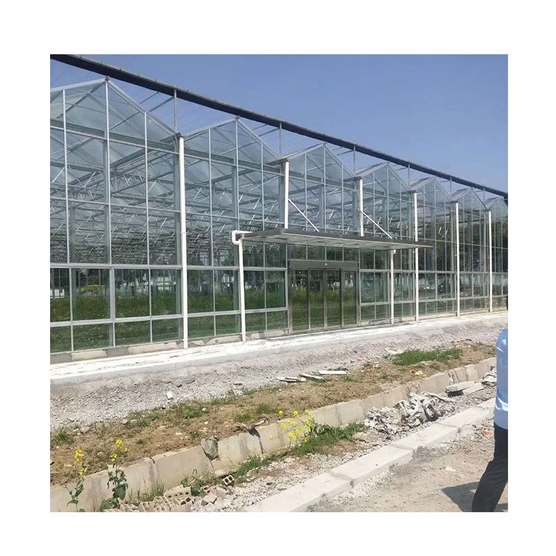 glass cover agricultural green house with hydroponic