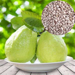 fan shi liu wholesale thai green guava plant seeds for sale