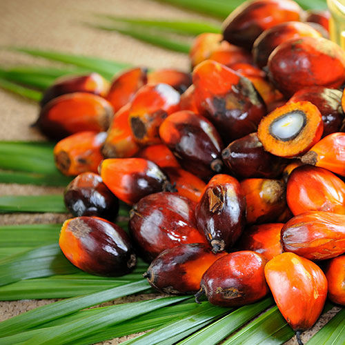 Vegetable Palm Oil / Refined Palm Oil CP8 CP10 In Bulk Premium Quality Wholesale