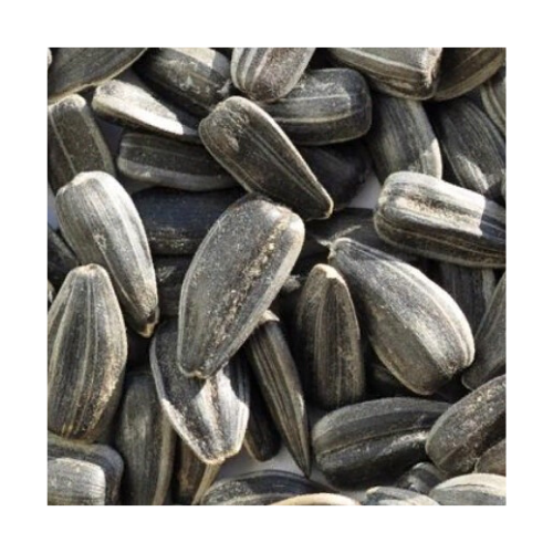 Organic Russian sunflower seeds