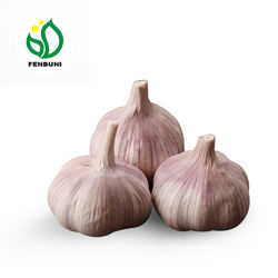 New Crop Normal fresh garlic specification