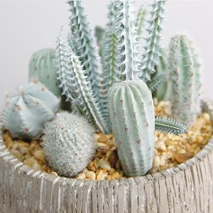 High-end decorazioni per la casa, artificiale cactus, succulente bonsai