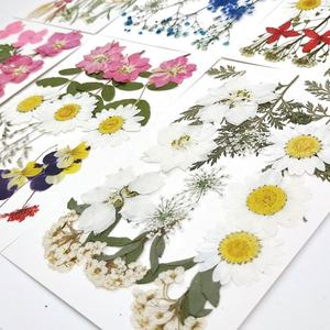 M-1417 High Quality Petals Makeup Cheap Real Dried Daisy Pressed Flower