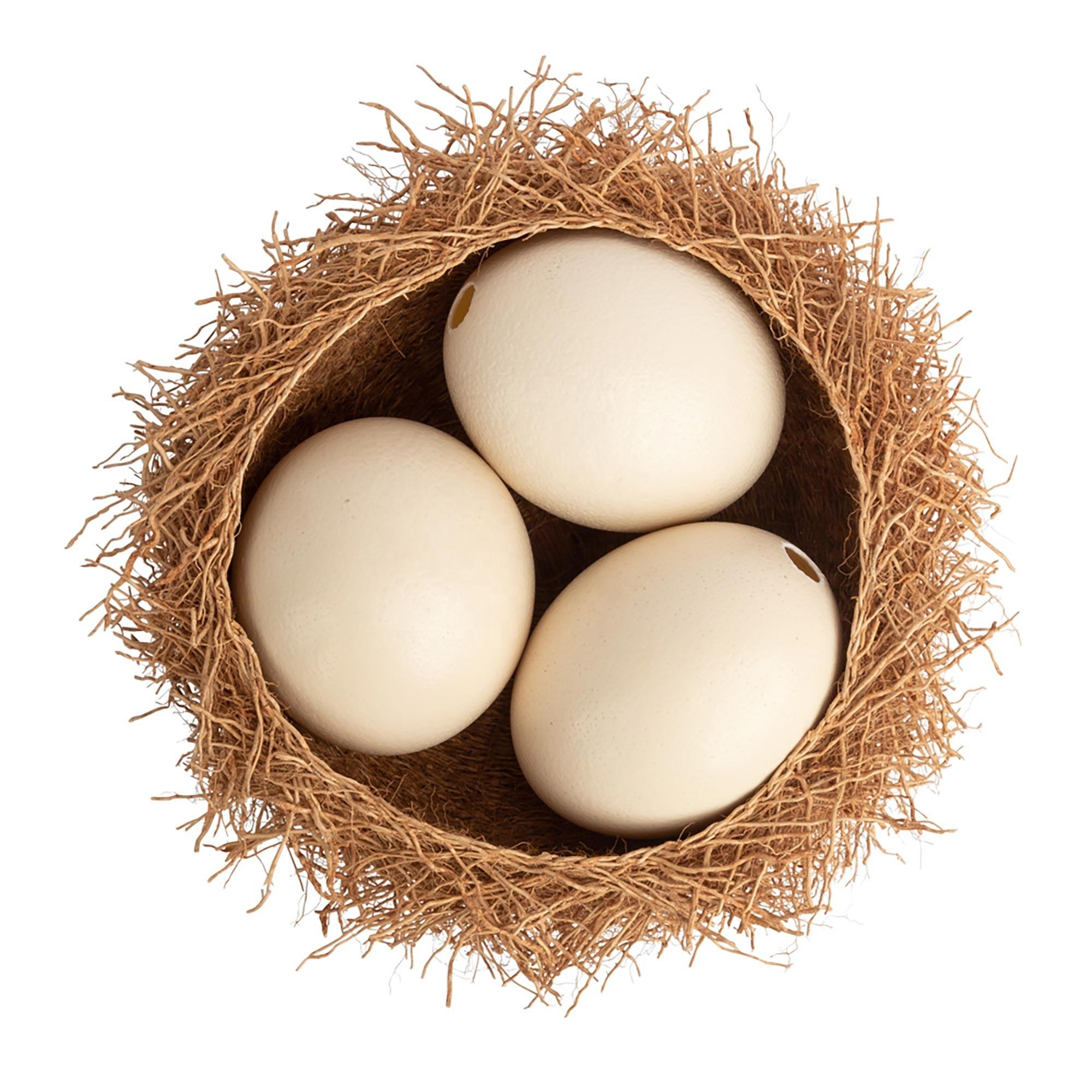 Fresh Ostrich, Emu and Rhea Eggs for Eating or Hatching