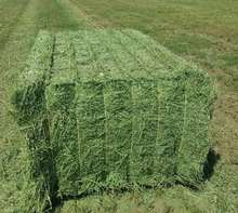 Alfafa Hay For Animal feeding stuff Alfalfa