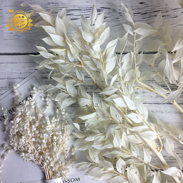 Wholesale natural preseerved bouquet dried white flower ruscus for wedding decor