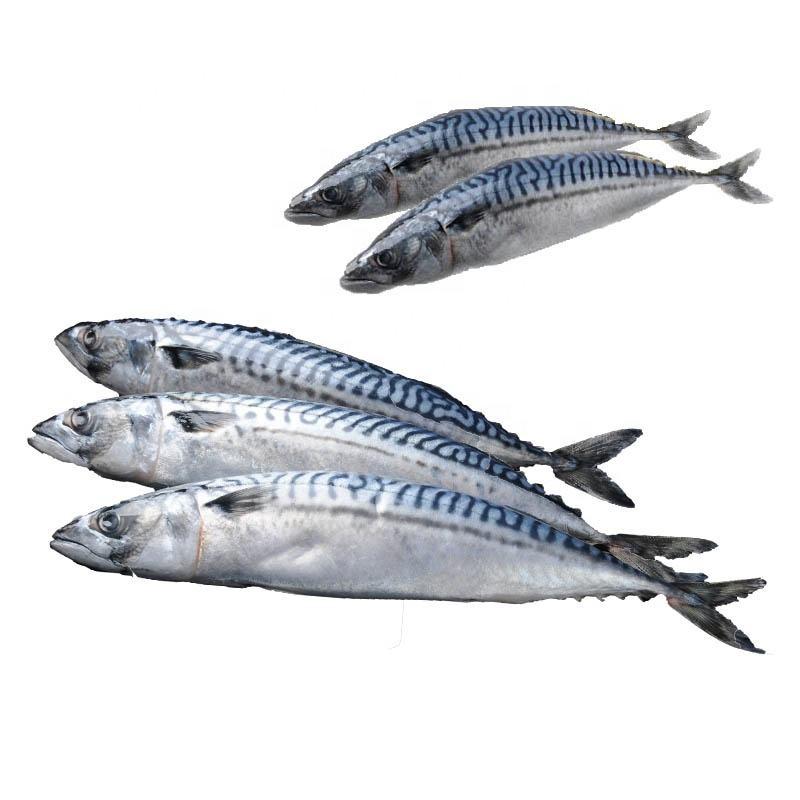 Huiyang Seafood High Protein Frozen Raw Fresh Fish Mackerel