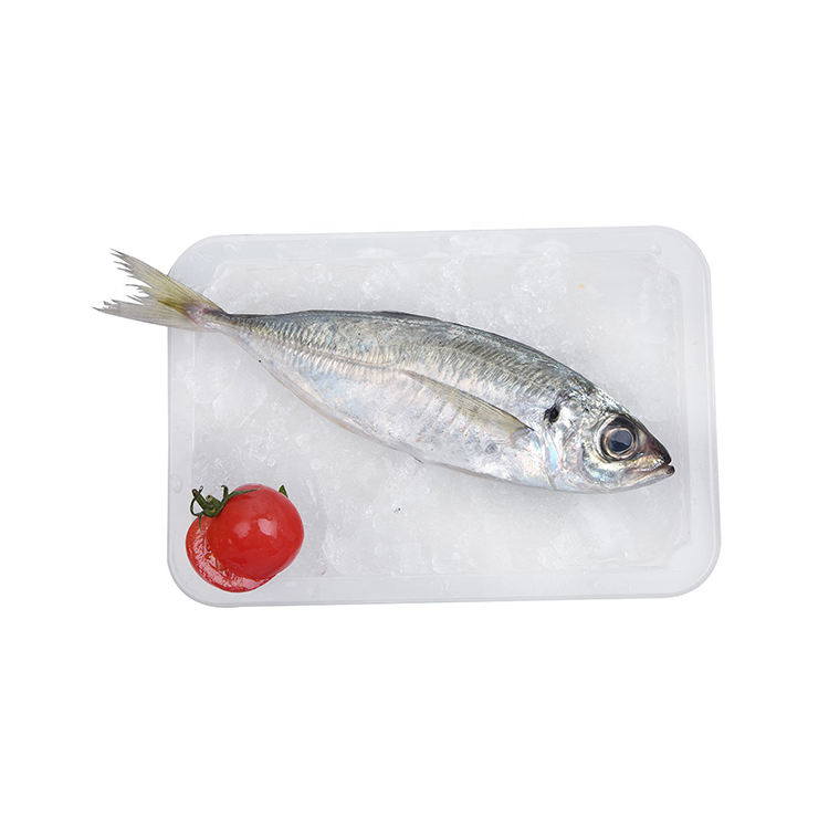 Good price with long-term service quality frozen horse mackerel fish mackerel food