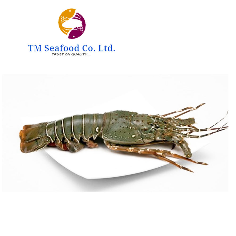 Best Quality Whole Frozen Lobster in Wholesale price From Bangladesh