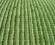 Soft Hand Feeling NWT Artificial Grass for Home Garden Landscaping TURF