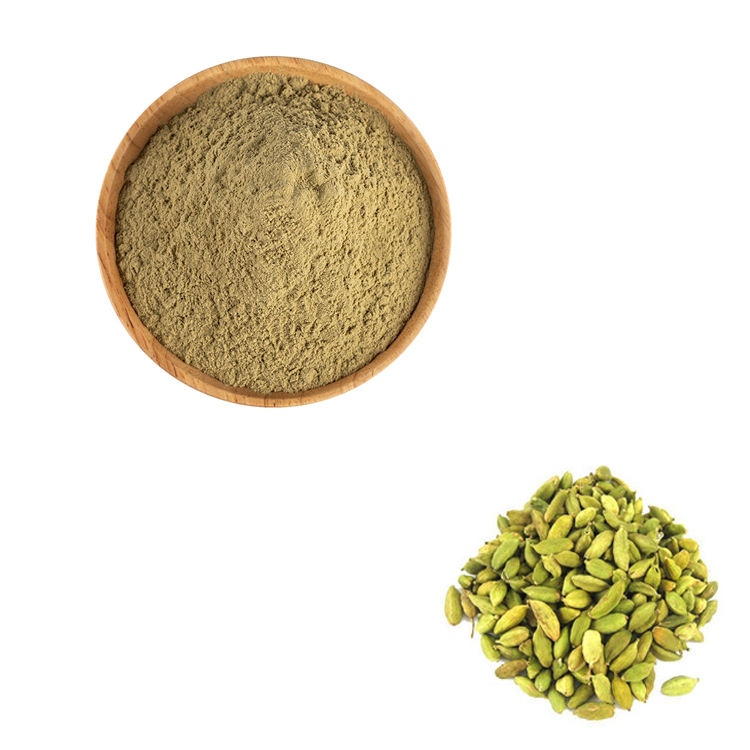 Wholesale Price 10:1 Cardamom/ Cardamum Extract by free shipping