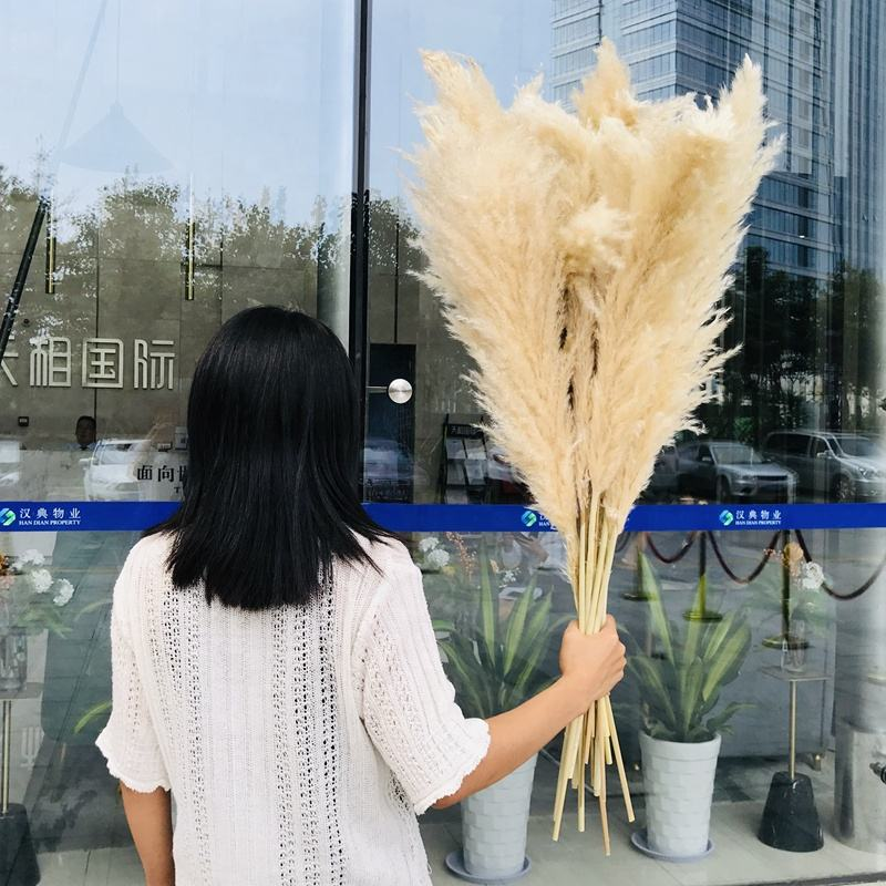 W0672 Wholesale Extra Large Stem 60cm Pink Primary Home Wedding Decorative Natural Dried Pampas Grass for Sale