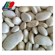 Supply light speckled kidney beans long shape for sale in china, chinese types of broad beans, beans green
