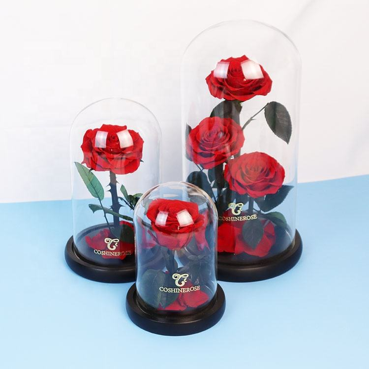 Luxus Dubai Dekorative Real Touch Rosen Weiß Konservierte Blumen In 12 20cm Glas Dome