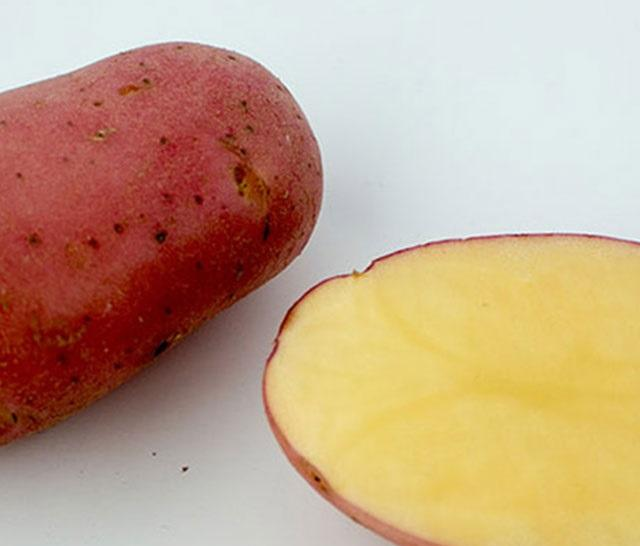 Fresh Asterix potato for importers in Russia