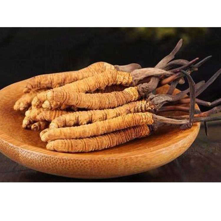 cordyceps 40% polysaccharide militaris price lung tonic extract natural