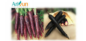 Natural health helpful Instant Spray Dried Black purple violet Carrot Juice Powder