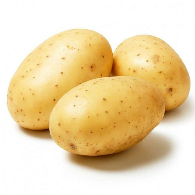 Organic fresh potatoes from Qingdao high quality custom style weight origin type shape size product place