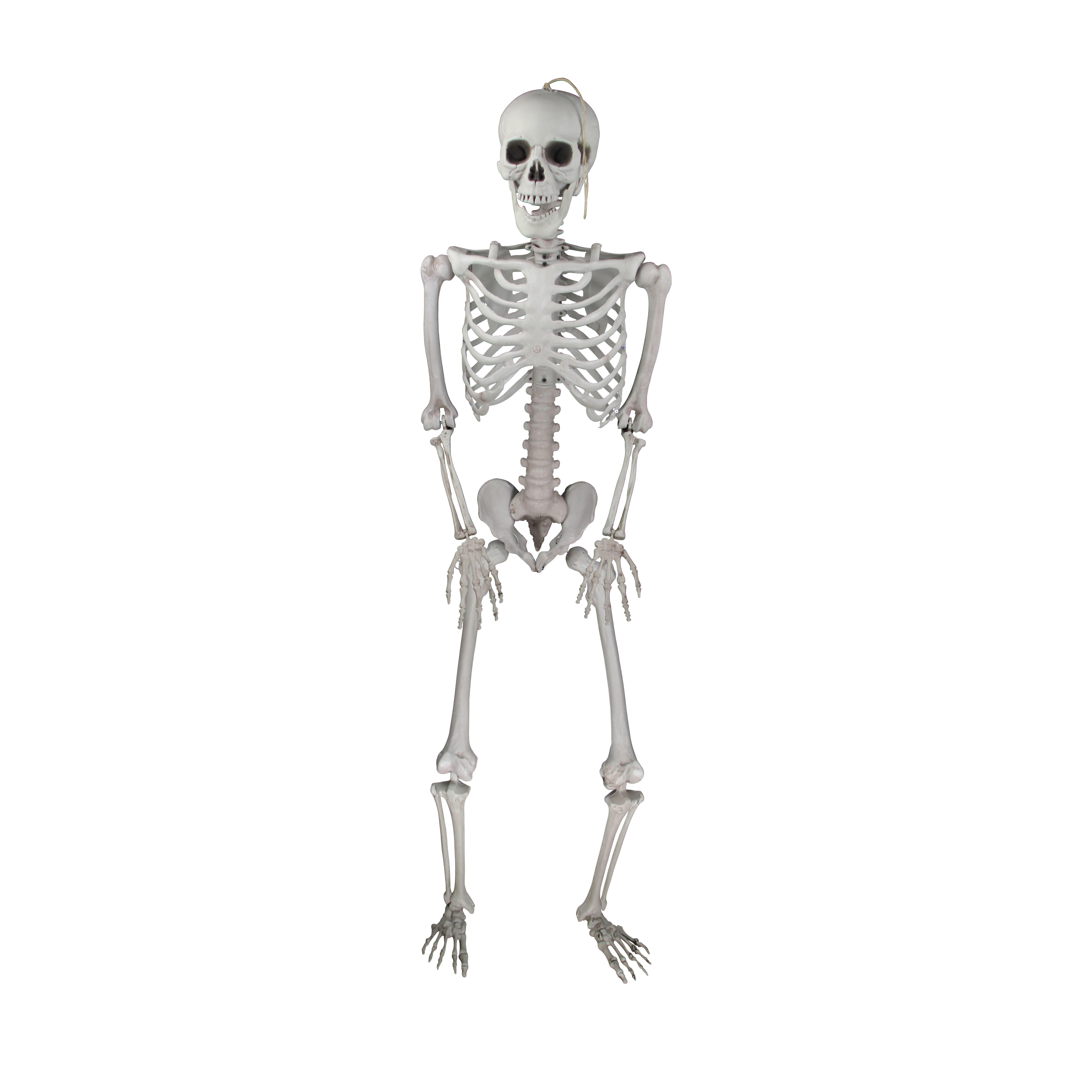 Molezu Halloween Skeleton Prop Plastic Adult Size Jointed Body skeleton Horror Haunted House Decoration Prop