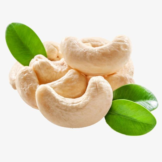 Ww 210, Ww 320, WW240 Cashew Nuts for Export