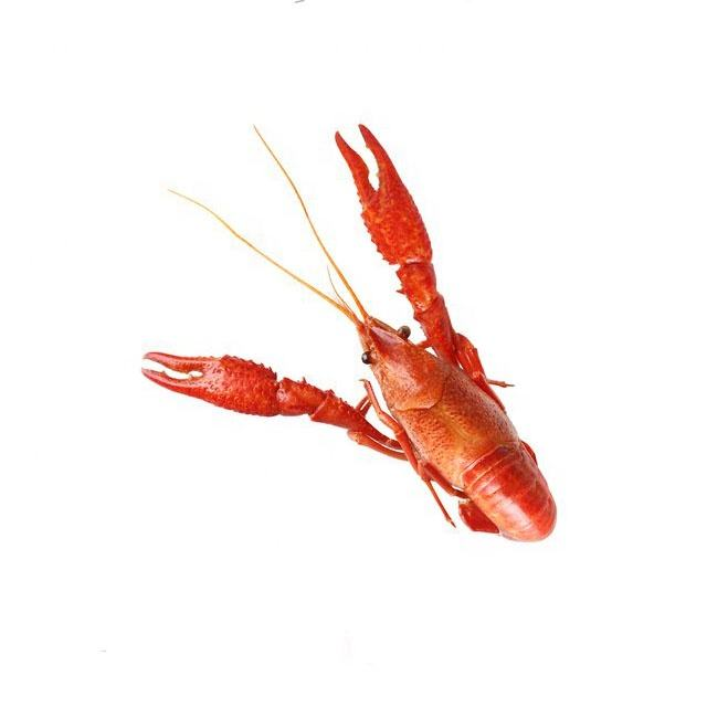 Frozen fresh live Crayfish on sale