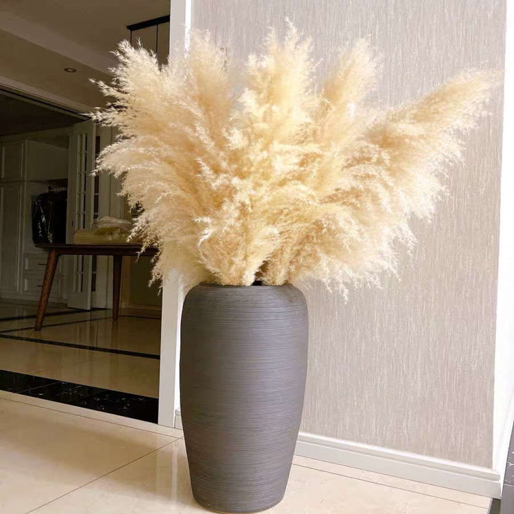 M020 Wholesale Dried Flowers Arrangement Wedding Natural Real Big Tall 6ft Beige Cream Full Fluffy Preserved Dried Pampas Grass