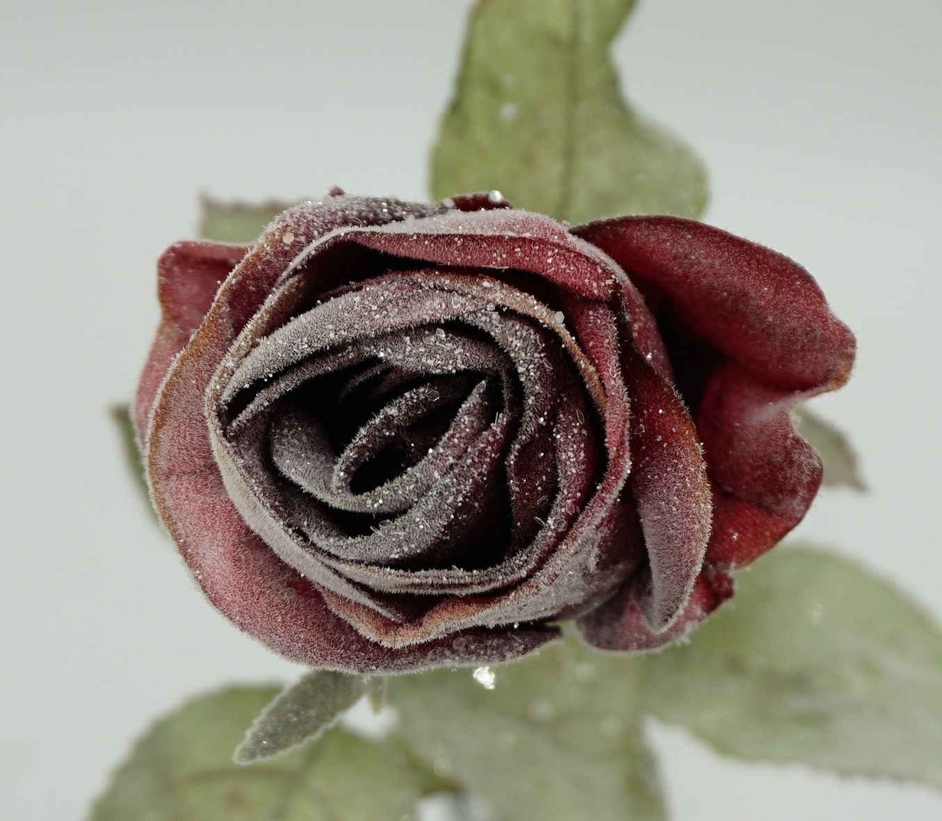 Excellent quality frost snow rose artificial rose flowers for decoration