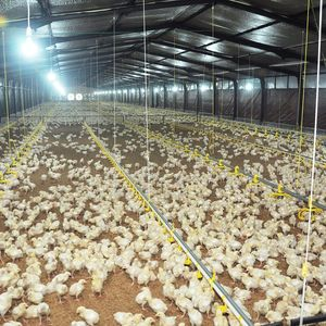 Chinese Credible Supplier Chicken Farming Feeder Broiler Pan System