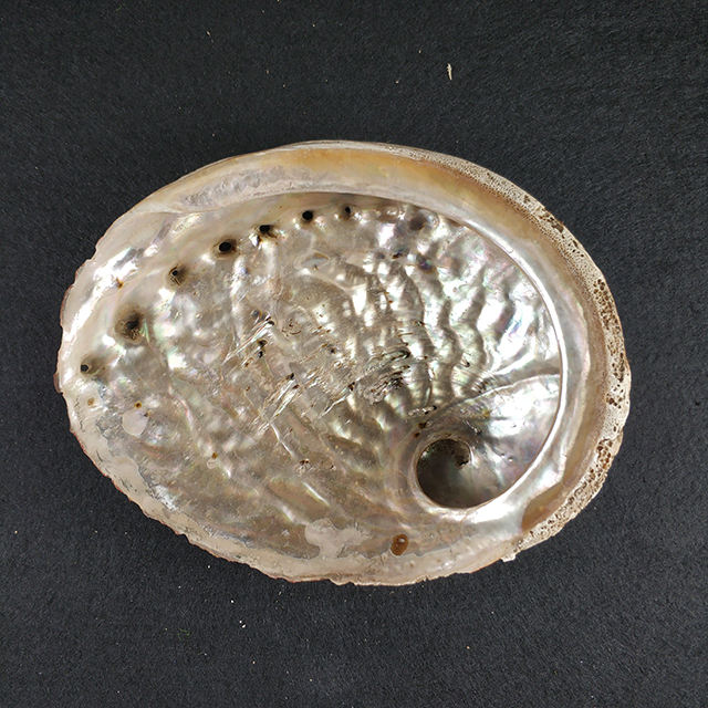 Wholesale Natural unprocessed Australian raw abalone shells,Are many sizes choose