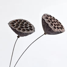 2019 most popular real natural dried seedpod of the lotus for dry home decor