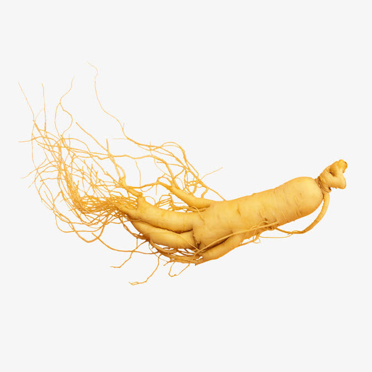 Ginseng from Northeast/ Wild Ginseng Health Products