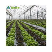 Customized Size Agricultural Greenhouse Multispan Greenhouse Vegetable Greenhouse