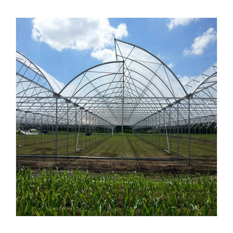 Agricultural Low Cost Plastic Film Covered Sawtooth Greenhouse