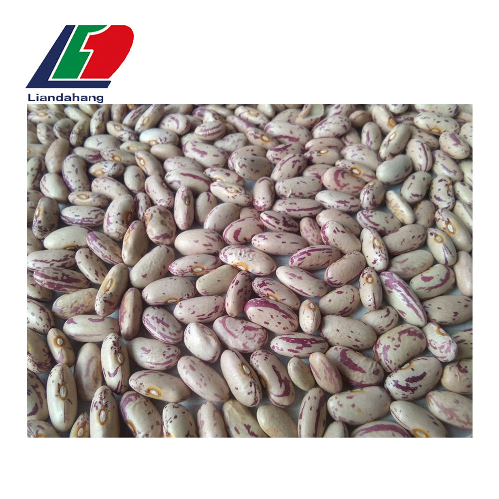 Supply Light Red Kidney Beans, Red Kidney Beans Dried, Red Kidney Beans Price Per Ton