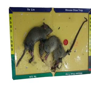 Factory supply eco-friendly mouse rat glue trap with fair price