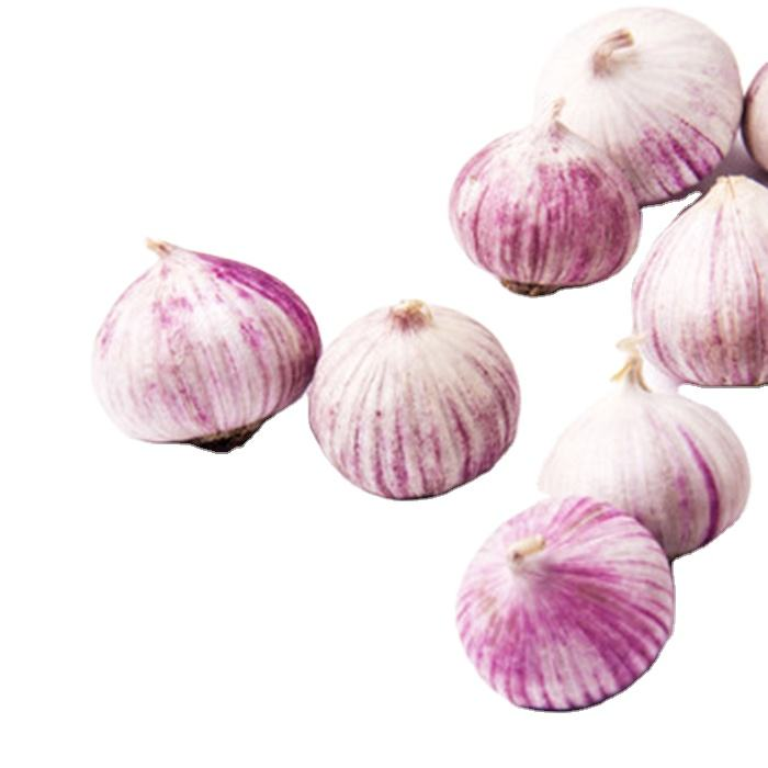 Solo garlic white garlic red garlic for sale