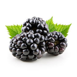 Wholesale Perfect Pact Fresh Blackberries sourced from family farms in the USA