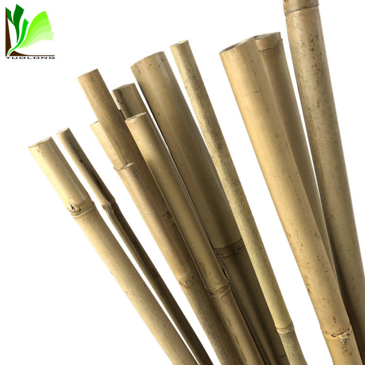 High Quality Cheap Dry Natural Straight Raw Green Garden Tonkin Bamboo Poles/Canes/Stakes/Stick for Sale