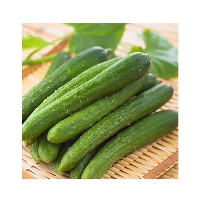 Big Sale for Fresh and Tasty Cucumber from Vietnam - Organic Cucumber for EU, USA, Japan, UAE Market - Natural Fresh Cucumber